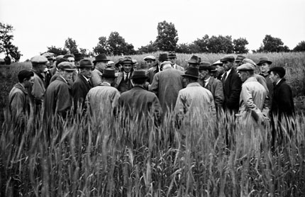 Geoff Charles, Listening to Dai Walters Davies (Advisory Mycologist UCW Aberystwyth) talking about potato spraying, 25 July, 1942. Courtesy of the National Library of Wales